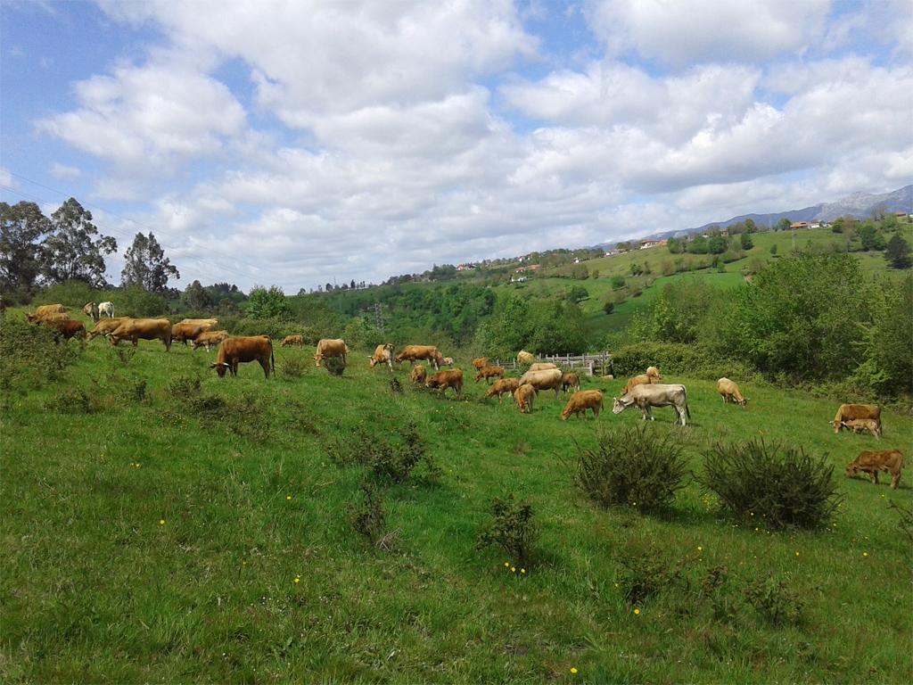 Casa rural la casillina cangas de onis asturias - Casa rural en cangas de onis ...